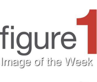 Figure 1 Image of the Week,  9/21/14